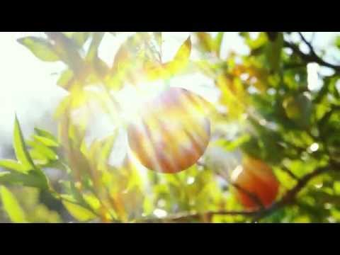 ECOS Orange Mate