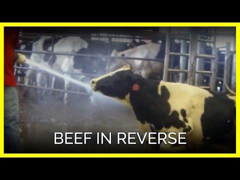 Beef in Reverse