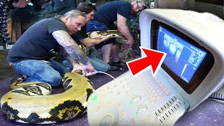 ULTRASOUNDING MY 20 FOOT GIANT SNAKE FOR EGGS!!| BRIAN BARCZYK by Brian Barczyk