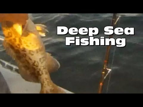 Deep sea fishing clearwater florida for Queen fleet deep sea fishing clearwater fl