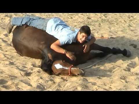 il cavallo più educato al mondo!