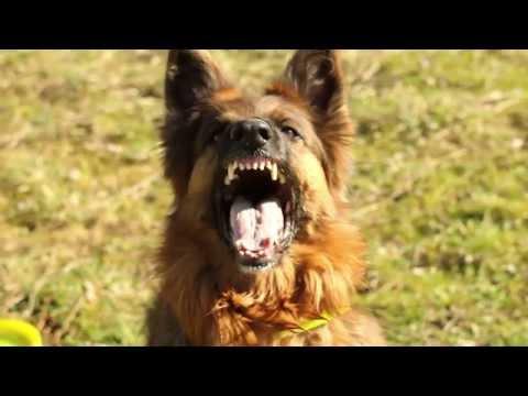 allenamento perfetto per un cane eccezionale!