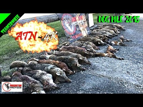 Atn X- Sight 5x20 4k Pro Coyote Hunting Contest 2018
