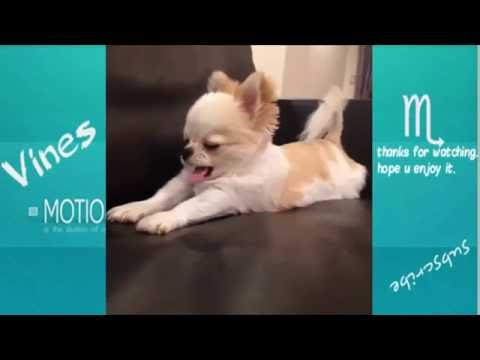 TRY NOT TO LAUGH-Funny Animals Fails Compilation 2016 (Part 4)
