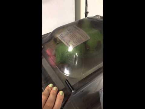 Vacuum Sealing Stuffed Animals