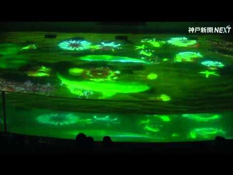プールにクジラの映像 須磨海浜水族園