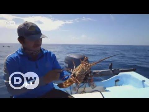 Tierschutz: Mexikanische Fischer halten den Atem an ...