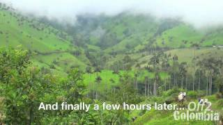 """http://off2colombia.com has filmed the trek to the Cocora Valley in the coffee region of Colombia. This is a very unique landscape with beautiful green mountains and thousands of giant wax palm trees (the biggest in the world, up to 60 m tall).Check our article about the Cocora Valley with Information & advice about how to get there, where to stay and what to do. Here : http://off2colombia.com/cocora-valleyJoin our community to be informed about any new videos and get information about one of the most beautiful country in the world: Colombia!http://off2colombia.com/the-off2-community""""cocora valley"""" """"cocora valley colombia"""" """"valle of cocora"""" """"coffee route"""" """"coffe route colombia"""" """"coffee region"""" mountains trek coffee jungle forest salento """"palm trees"""" """"south america"""" adventure exploration"""