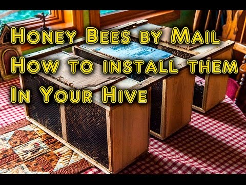 Honey Bee replacements, Installing package bees, backyard bee hive & apiary how to