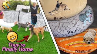 Bringing Our Dogs Home For The First Time And I Bought Them New Beds!