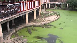 Samut Prakan Thailand  city images : Samut Prakan Crocodile Farm and Zoo, Samut Prakan Province, Thailand ( 7 )