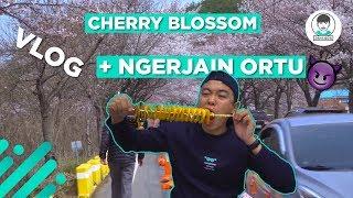 Video Cherry Blossom di Daejeon bareng keluarga👪 (MAMA👩 & PAPA👨) MP3, 3GP, MP4, WEBM, AVI, FLV Agustus 2019
