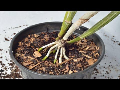 Curso Cultivo de Orquídeas - Substrato para Orquídeas - Cursos CPT
