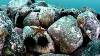 Морские сокровища.