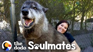 Wolf Dog Who Growls At Everyone Else Snuggles With His Best Friend | The Dodo Soulmates by The Dodo