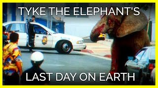 Tyke the Elephant's Last Day on Earth