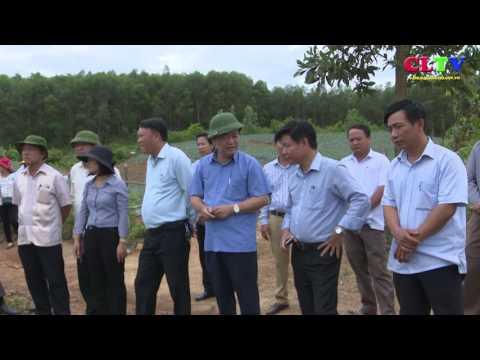 Cam Lộ hoàn thành trồng dứa nguyên liệu đợt 1