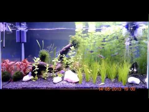 Lampada a led per acquari (Aquarium led lamp)
