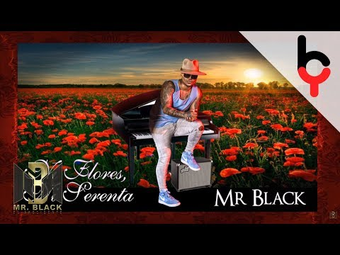 Letra Ni Flores, Ni Serenata Mr Black
