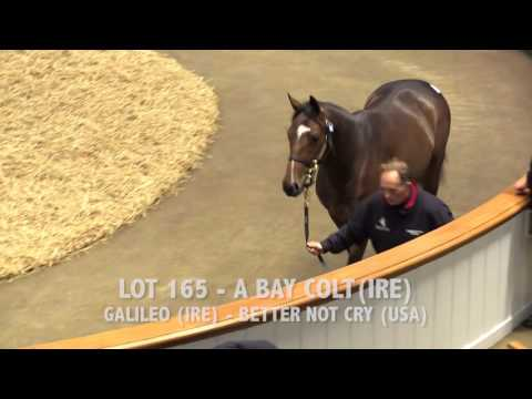 Tattersalls December Yearling Sale 2016