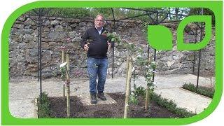 Ippenburger Gartentipps: Welche Dimensionen hat das Paradies?