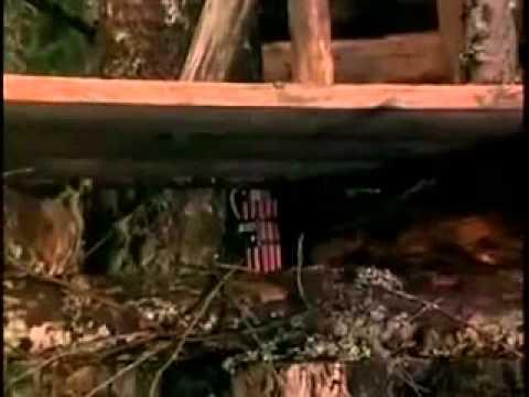 Forest Warrior Trailer
