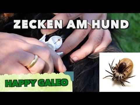 Zecken: Was hilft gegen Zecken und wie entferne ich Z ...