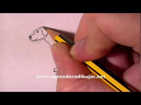 Hund Bleistift Zeichnung – Online Zeichnen Lernen