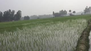 পাচিং বিরল উপজেলা