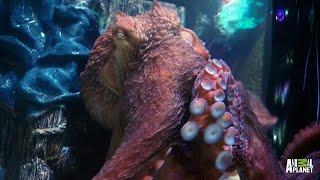 Wayde Fancies an Octopus Tank | Tanked