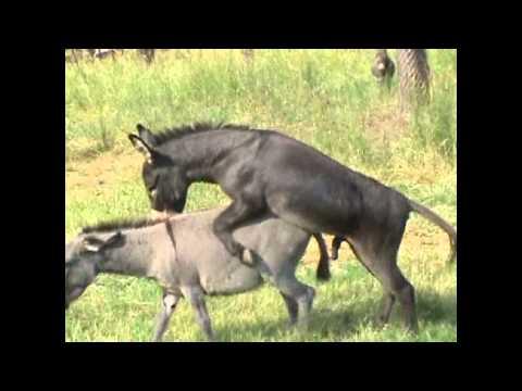 Very Happy Donkey!!!! Private