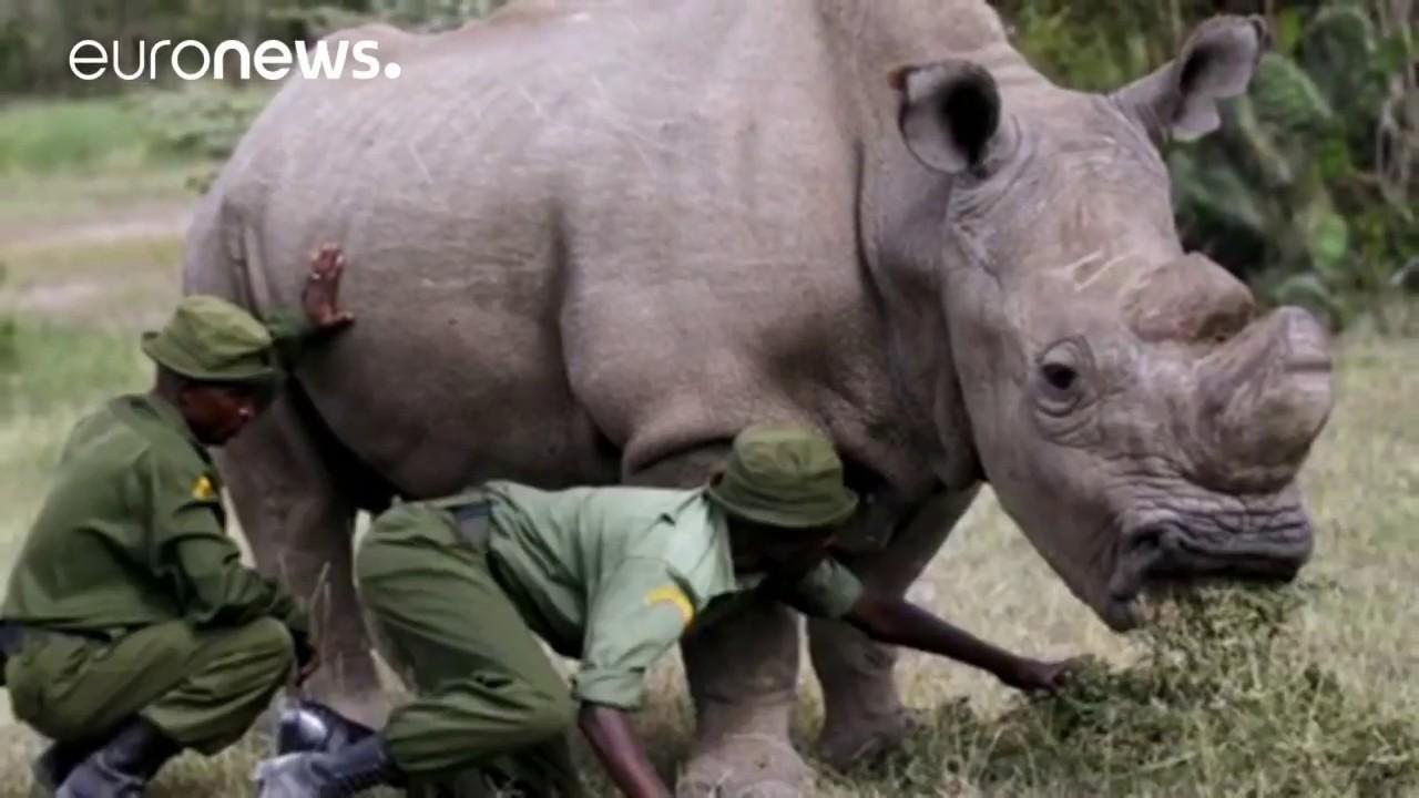 Ένας ρινόκερος στο Tinder