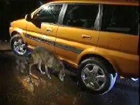 Banned Commercials - Honda - Car Pees At Dog.mpg