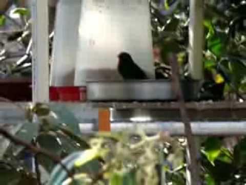 Aviario pajaros exoticos en Canarias