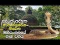 අදටත් අද්භූත නාග බලවේග තිබෙන මහියංගනයේ නාග වනය - The Mystic Nagadeepa at Mahiyanganaya