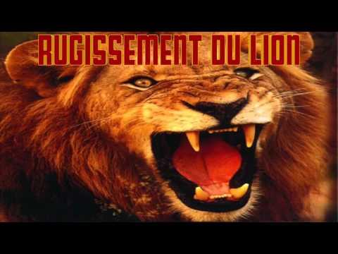 Rugissement du LION le CRI du LION qui RUGIT