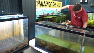 MOVING 200 FRESHWATER SHRIMP - PART 1 by  Challenge the Wild