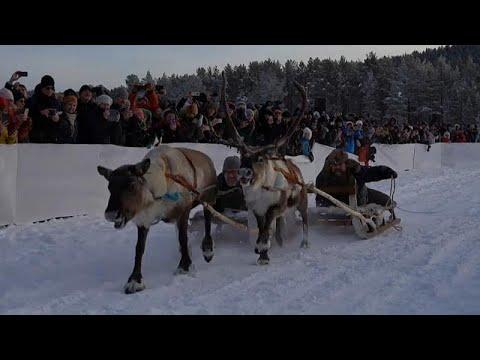 Σουηδία: Αγώνας με ταράνδους