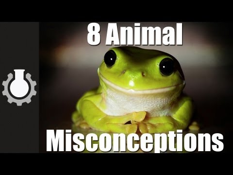 CGPGrey - 8 misconceptions about animals debunked. **CGPGrey T-Shirts for sale!**: http://goo.gl/1Wlnd Grey's Blog: http://www.cgpgrey.com/blog/ Vlog follow up on Dadd...