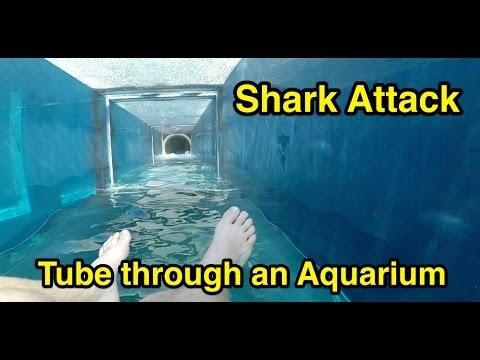 Shark Attack : Tube through an Aquarium : Atlantis The Palm in Dubai_Akvárium. Legeslegjobbak