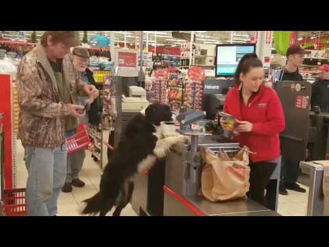 Adorably Clever Dog Does His Own Shopping