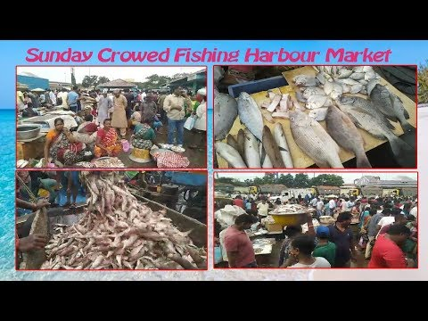 Sunday Crowed Fishing Harbour Market in Visakhapatnam,Vizagvision News...