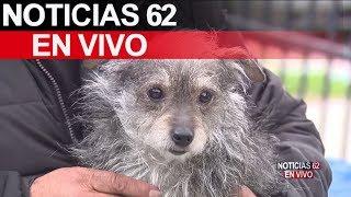 Perrito llamado Chewbacca salvo a familia en Hacienda Heights. – Noticias 62. - Thumbnail