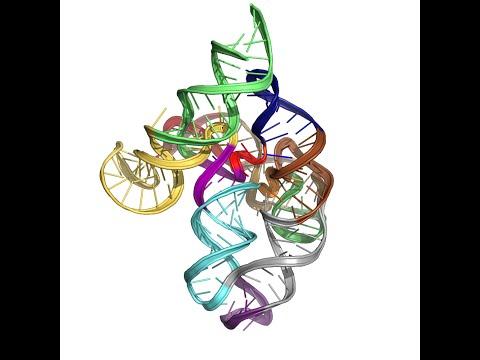 RNA puzzle 5 modeling animation on Youtube