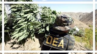 DEA WON'T RESCHEDULE CANNABIS | News Nug | CoralReefer by Coral Reefer