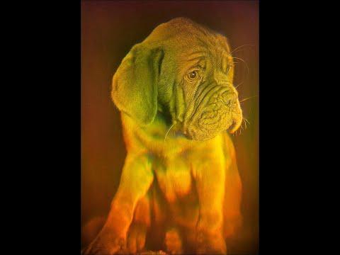 "11x16"" 28x40cm Puppy Dog - True 3D Laser Hologram Picture on Glass"