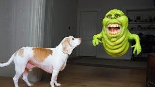Funny Dogs vs Slimer Prank: Funny Dogs Maymo & Potpie by Maymo