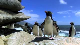 Такие милые пингвины