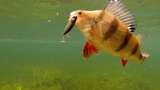 Fishing: Best Lures For Perch, Pike, Bass, Muskie. Underwater Cam.Рыбалка: ловля окуня на воблер.