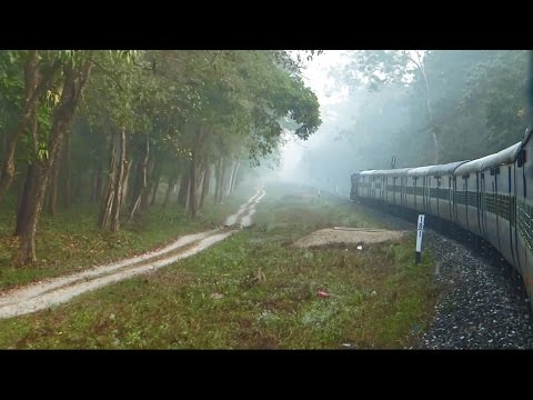 TRAIN Ride Through DENSE Jungle : Indian Railways